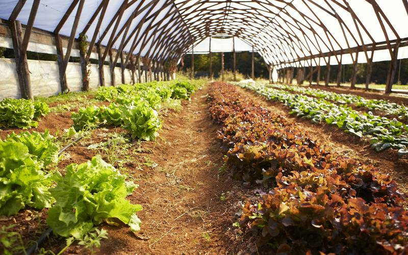 Lomax Farm: Launch New Organic Farmers
