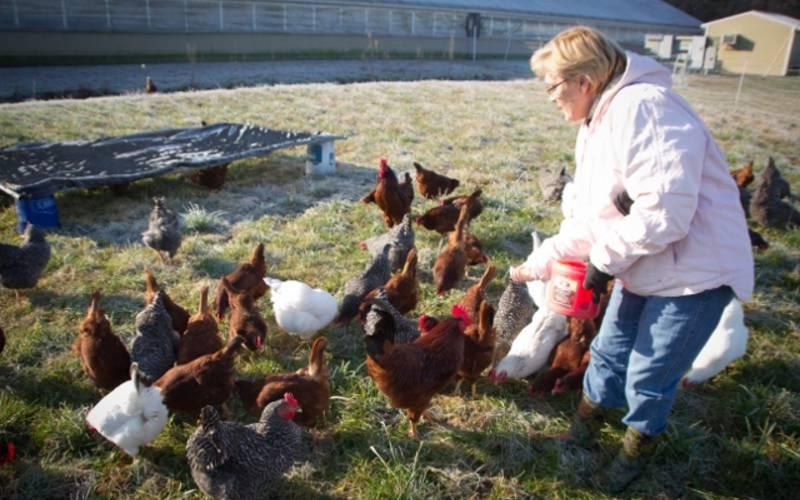 Carole Morison Goes Free Range After Food Inc Farms Markets