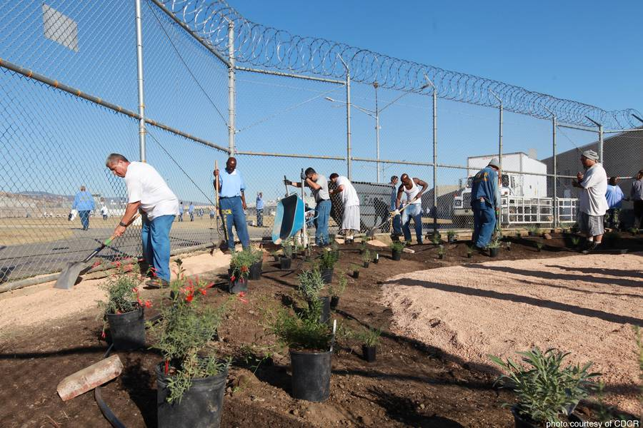 Gardens Transform Prisoners 39 Lives By Insight Garden