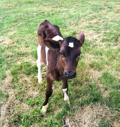 Under Orion Farm Is Profiled On Barnraiser
